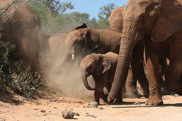 Individuele rondreis Zuid Afrika & Mozambique ervaring met voordeel